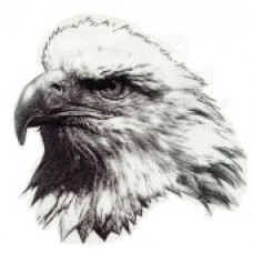 "Glenella School ""Eagles"" Temporary Tattoo"